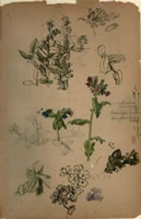 Study of various flowers