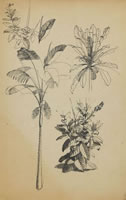 Sheet of studies with Palm, circa 1930