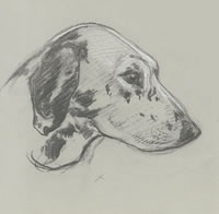 Head of a hunting dog, c.1930