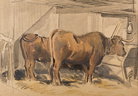 Oxen in a stable