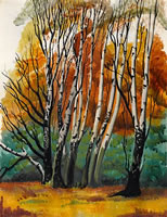 Birch trees - Richmond Park, circa 1930