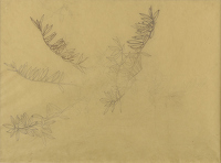 Study of Olive leaves