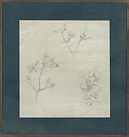 Study of branches and flowers